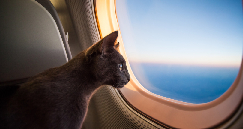 How to travel to Panama with my Pet